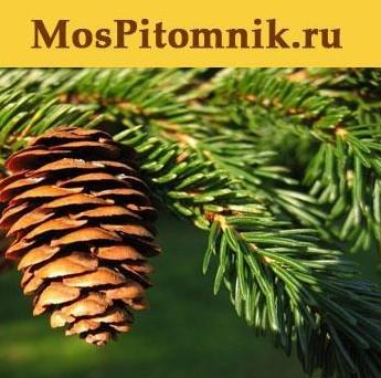 Садовый центр МосПитомник
